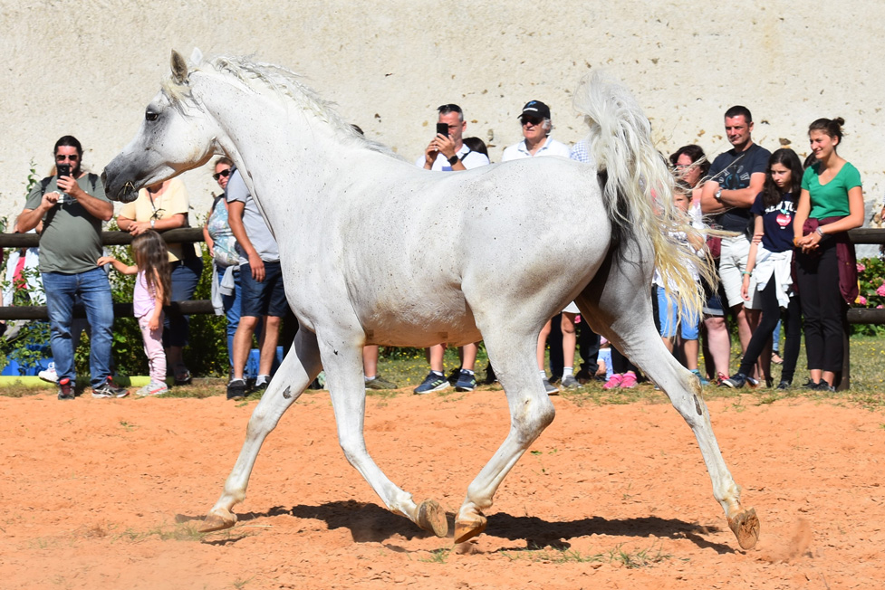 TARAH AA  2012 -FOUNDATION MARE